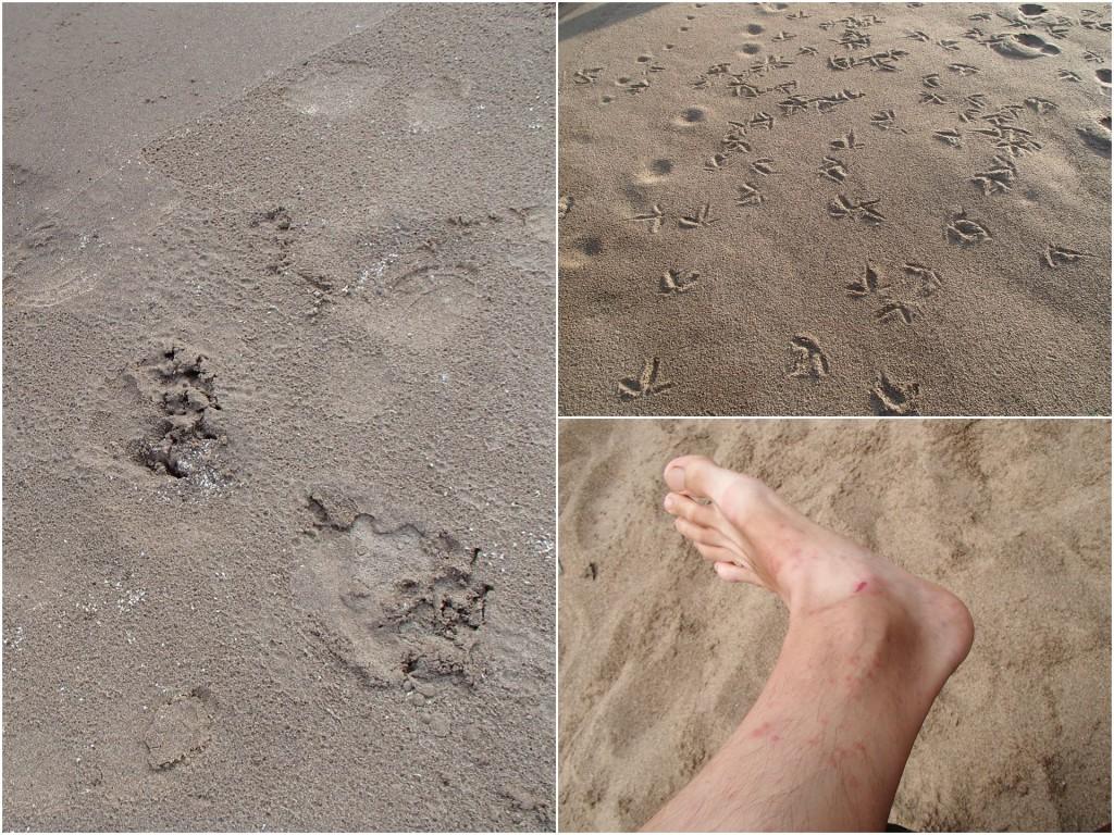 bear_traces